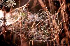 Lokale spin is een kunstenaar!